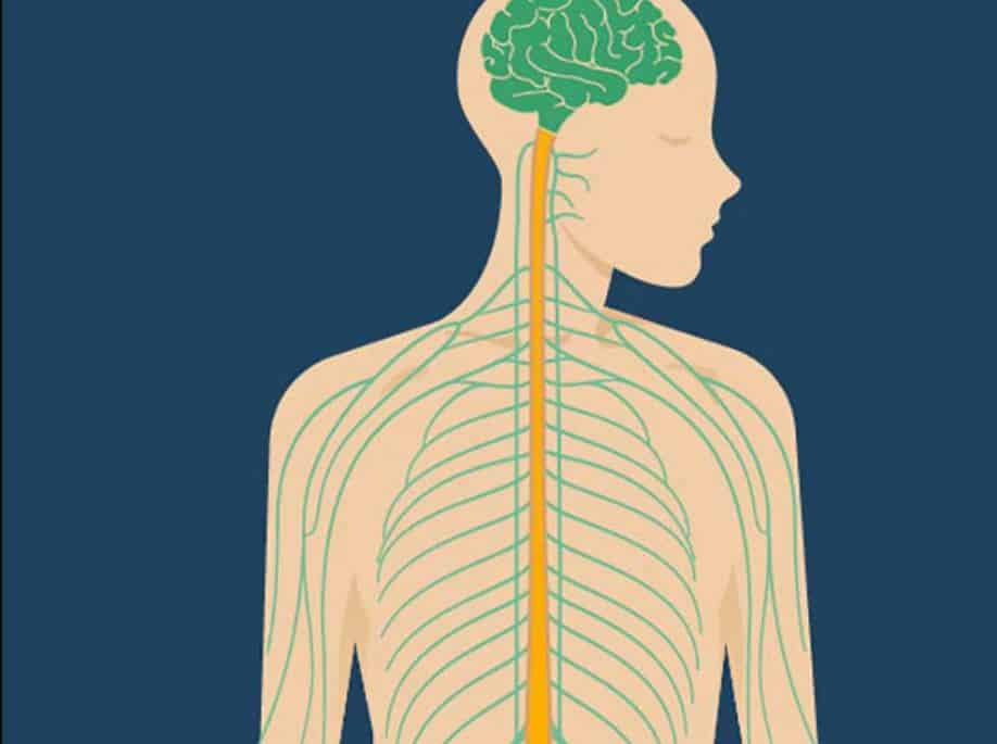 What Vitamins Help Nerve Regeneration?