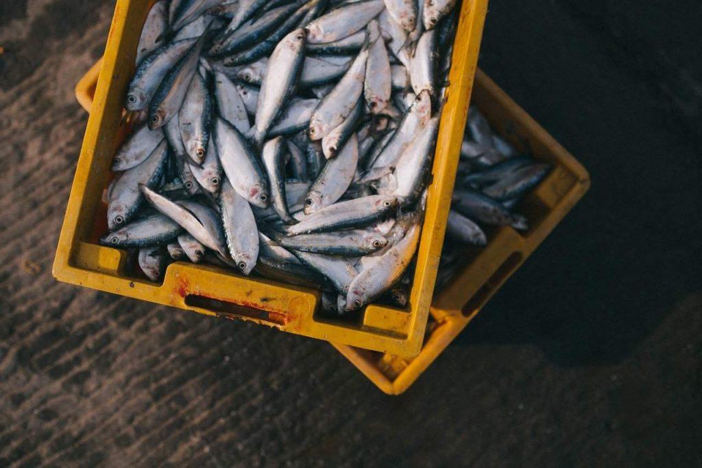 choline source fish
